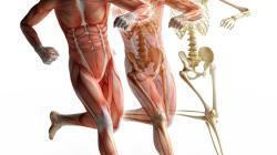 Curso-Superior-Anatomia-Lesiones-Deportivas